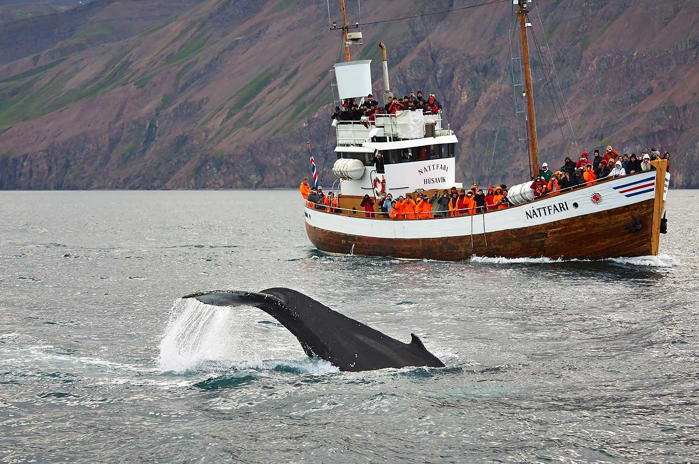 Akureyri in Northern Iceland, Husavik Wale safari