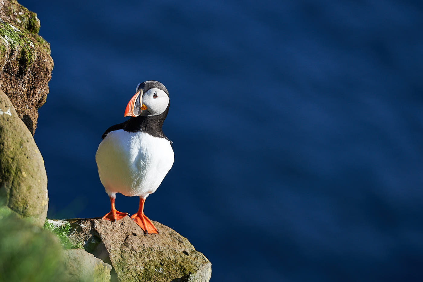 Puffin in Latrabjarg